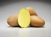 Семенной картофель из Германии
