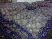 Картофель белорусский оптом выгодная цена