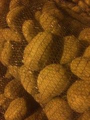 Картофель урожай 2016 оптом