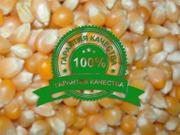 Семена кукурузы оптом в беларуси от производителя