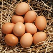 Куриное яйцо С1 с дисконтом от птицы фабрики